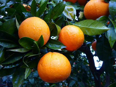 Vitamina C: funciones y fuentes