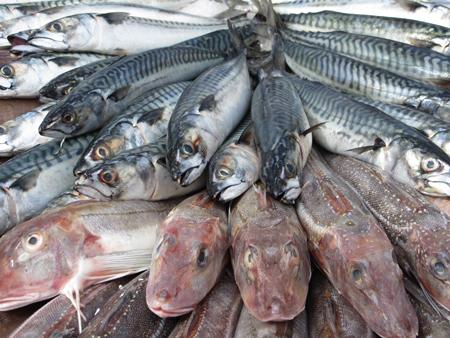 migraña y nutrición, pescados túnidos