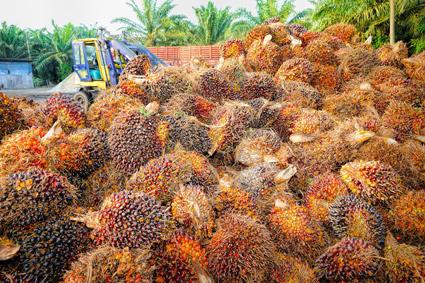 por que es malo el aceite de palma